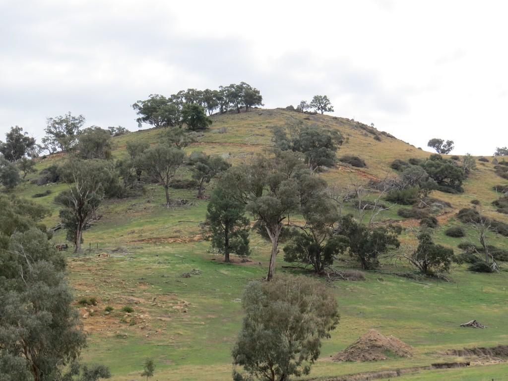 Farm for Sale - Lot 147 Tarrants Gap Road, Wyangala NSW - Farm Property