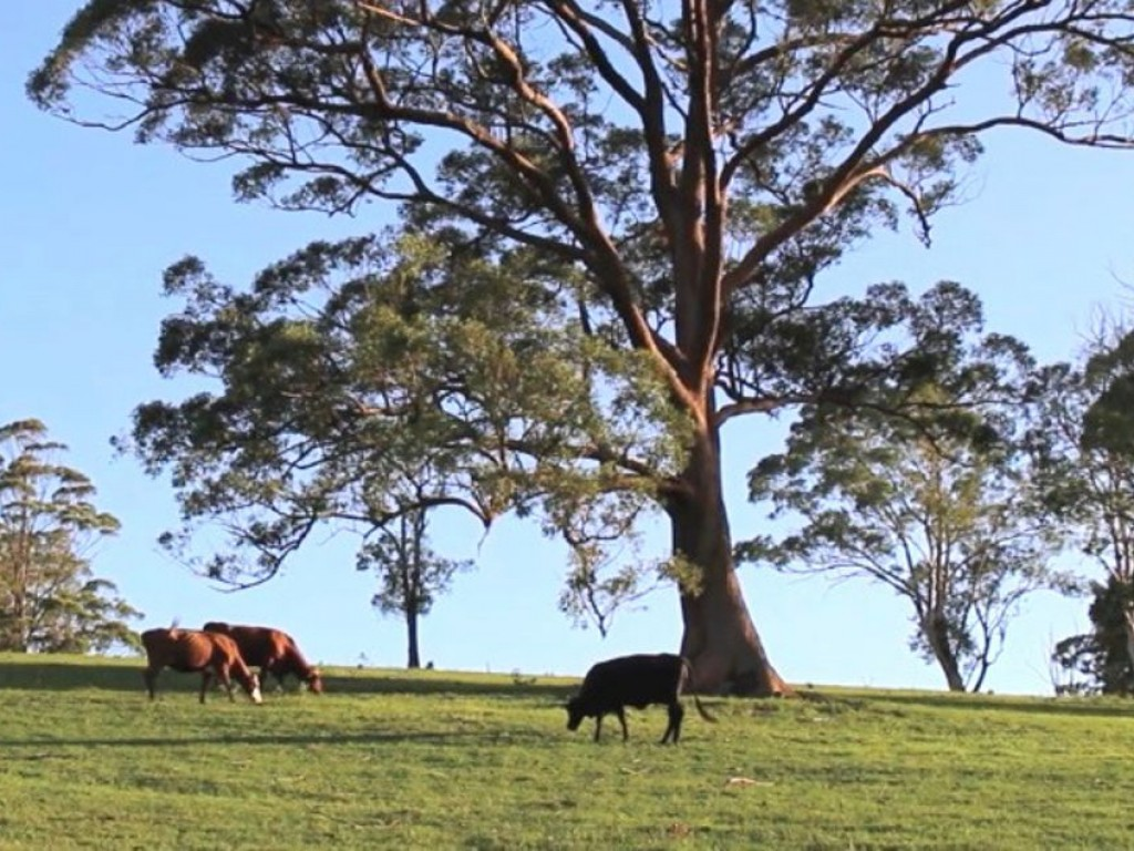Farm for Sale - Address available by request, Upper Rollands Plains, NSW - Farm Property