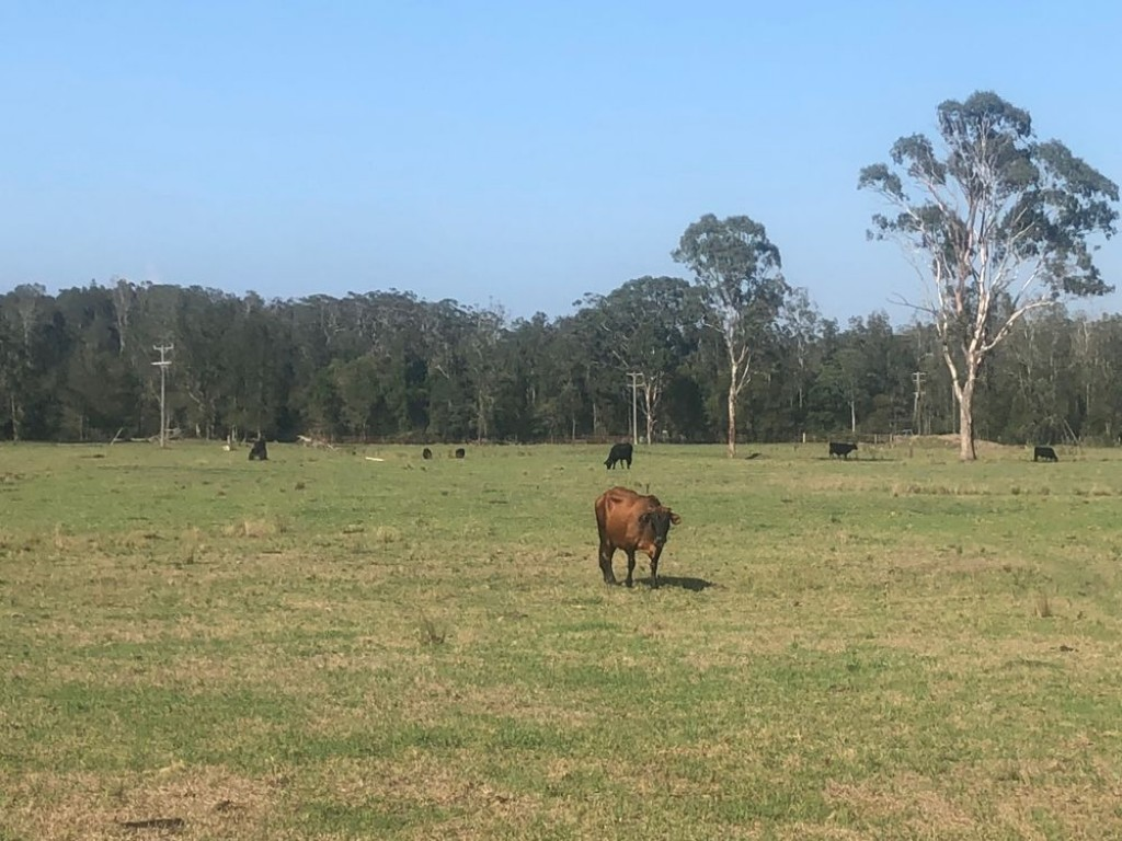Farm for Sale - Lot 356 of 583 Maria River Road, Crescent Head NSW - Farm Property