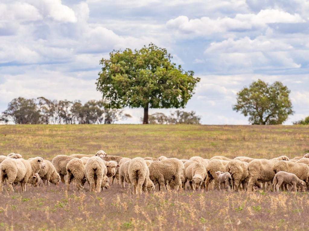 Farm for Sale - Nevada Par ,Gee Lane, Wattamondara NSW - Farm Property