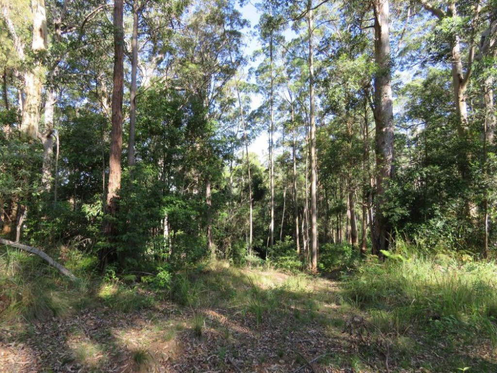 Farm for Sale - Address available by request, Birdwood NSW - Farm Property