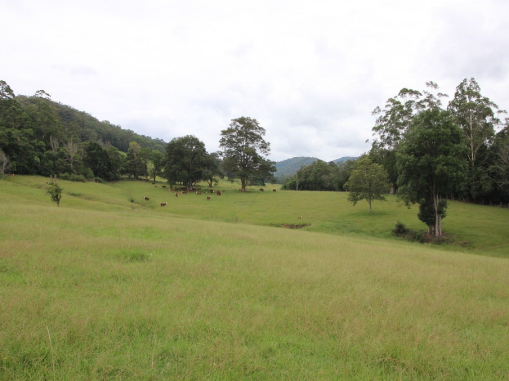 Rural Property & Farms for Sale - Lot 101 Pappinbarra Rd - Farm Property