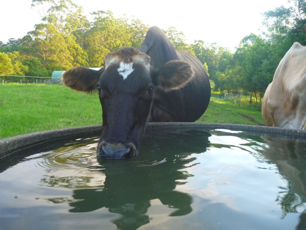 Farm for Sale - Address available by request, Comboyne NSW - Farm Property