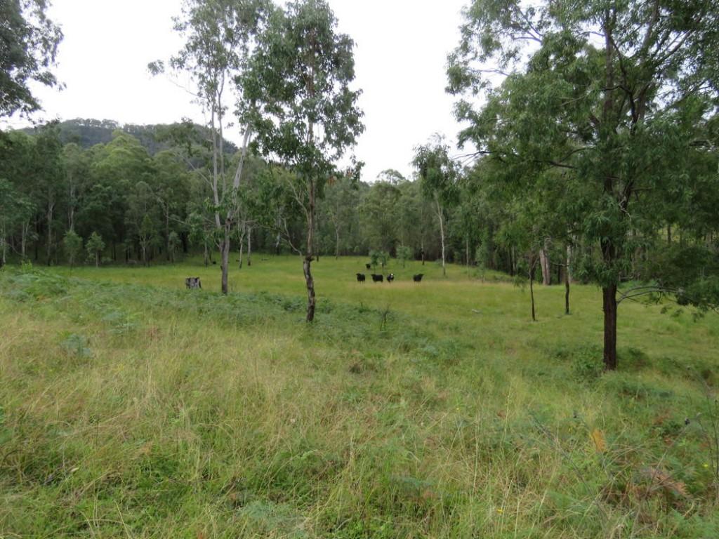 Farm for Sale - 30 Carrai Road, Willi Willi NSW - Farm Property