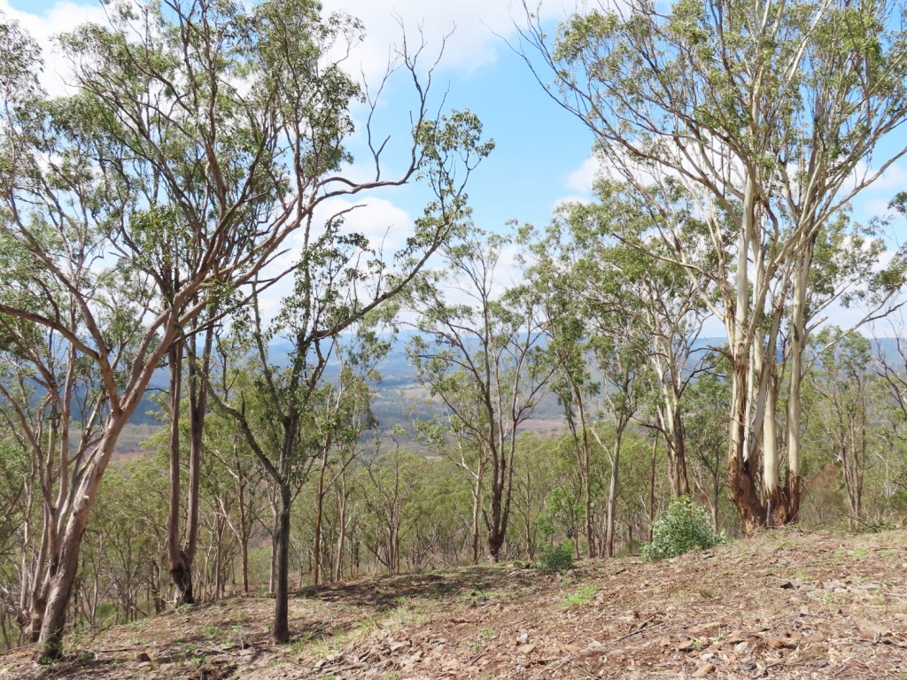 Farm for Sale - Address available by request, Budgee QLD - Farm Property
