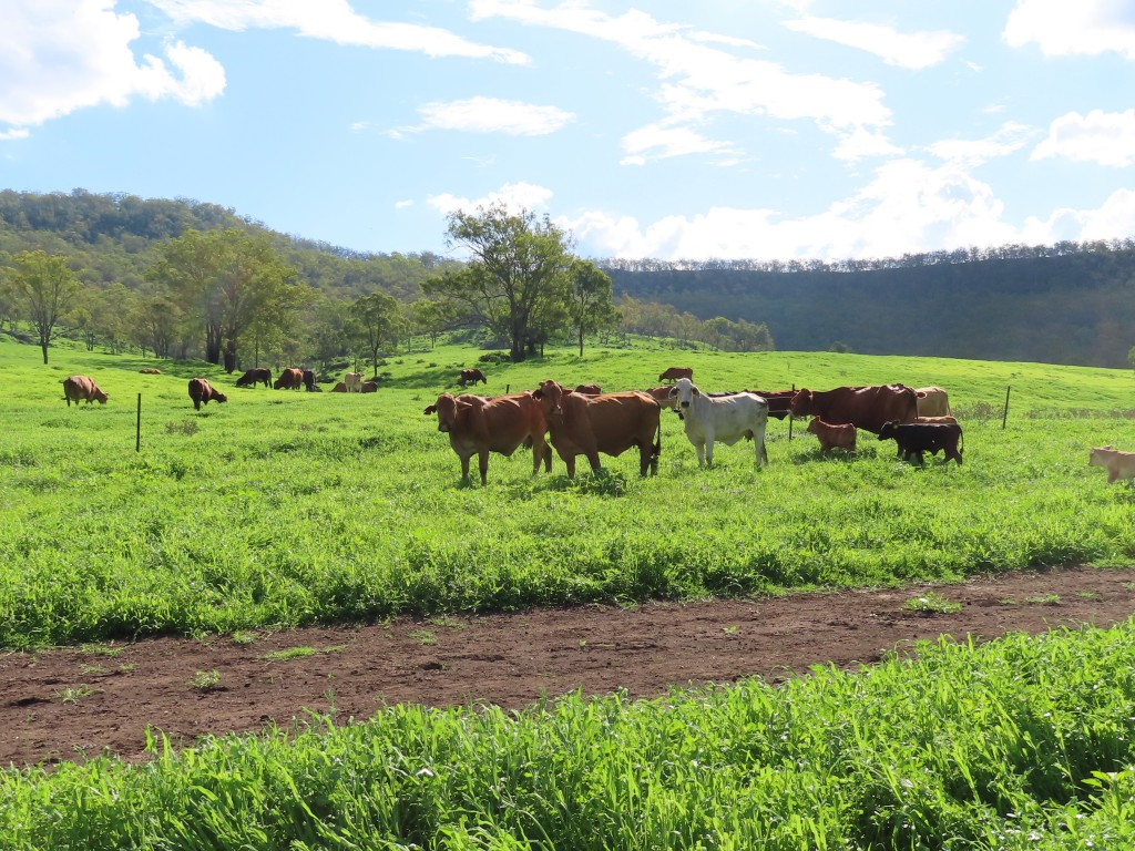 Farm for Sale - Lot 21 Brady Road, West Haldon QLD - Farm Property