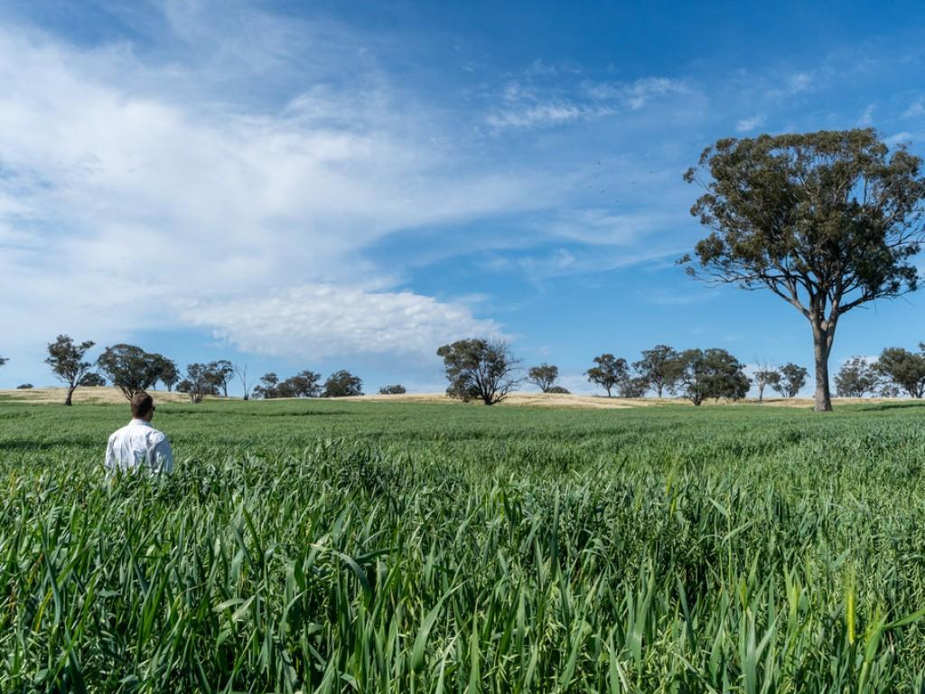 Farm for Sale - 6119 Burrendong Way, Stuart Town NSW - Farm Property