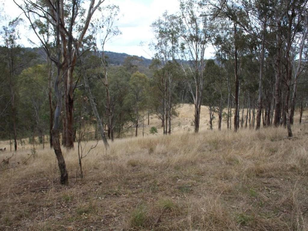 1465 Billirimba Road Tenterfield - NSW