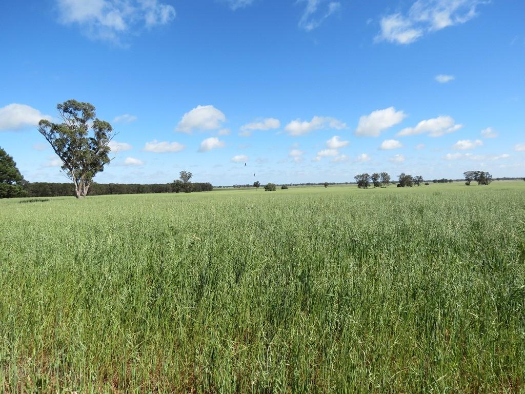 Warriston  Pine View Road, Dubbo, NSW 2830