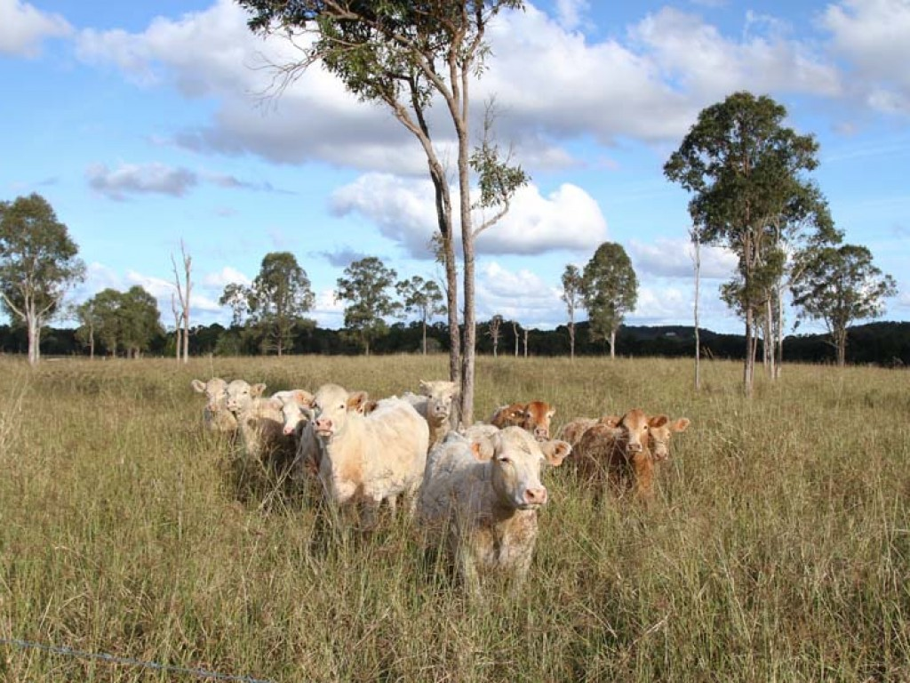 Rural Property & Farms for Sale - Address available by request - Farm Property