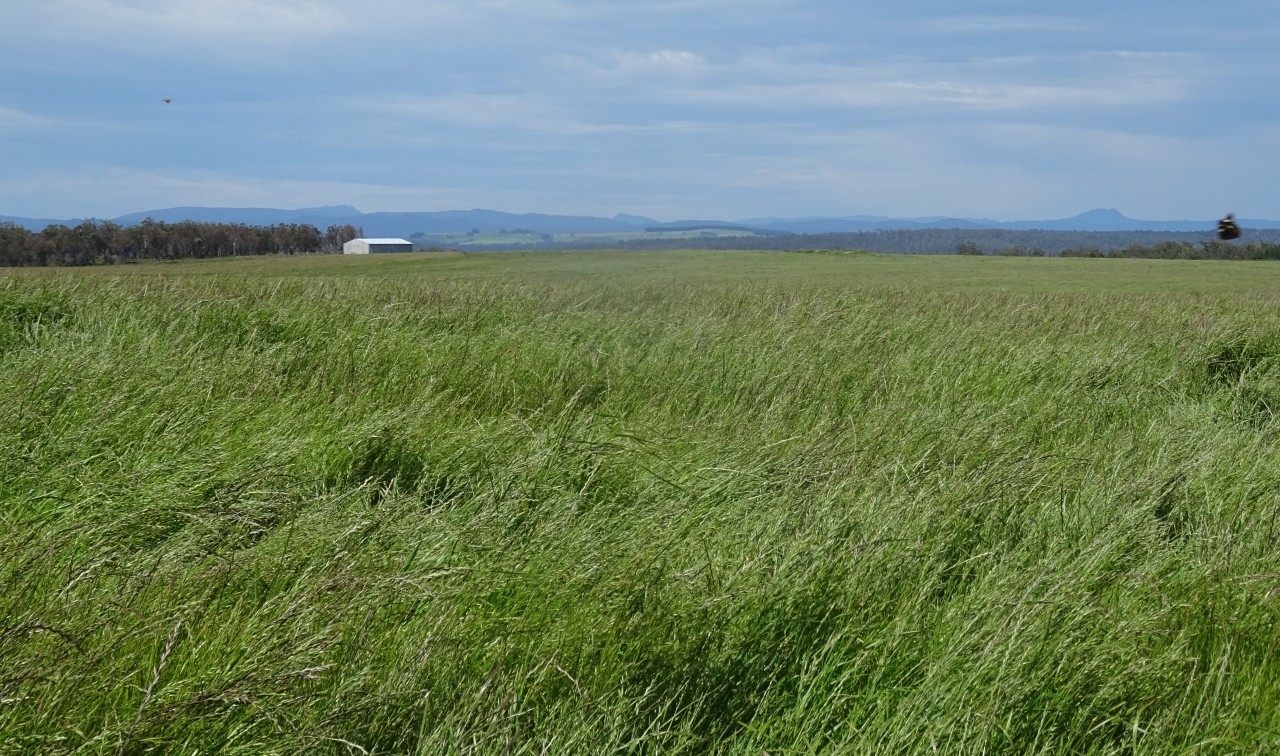 Farm for Sale -   Waterhouse Road, Boobyalla TAS - Farm Property