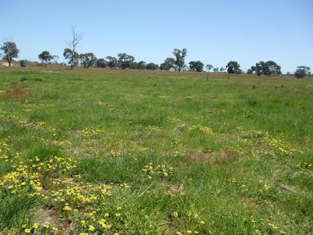Farm for Sale - 402 Broadview Road, Western Flat, SA - Farm Property