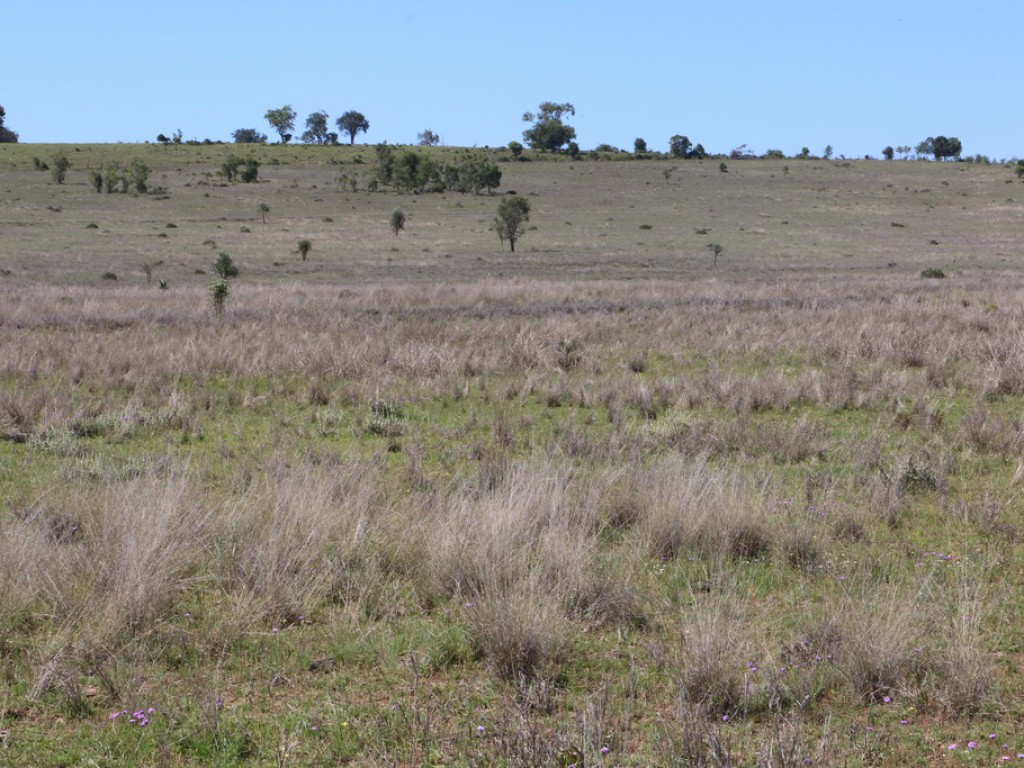 Farm for Sale -  Mountain Rd, Wallumbilla QLD - Farm Property