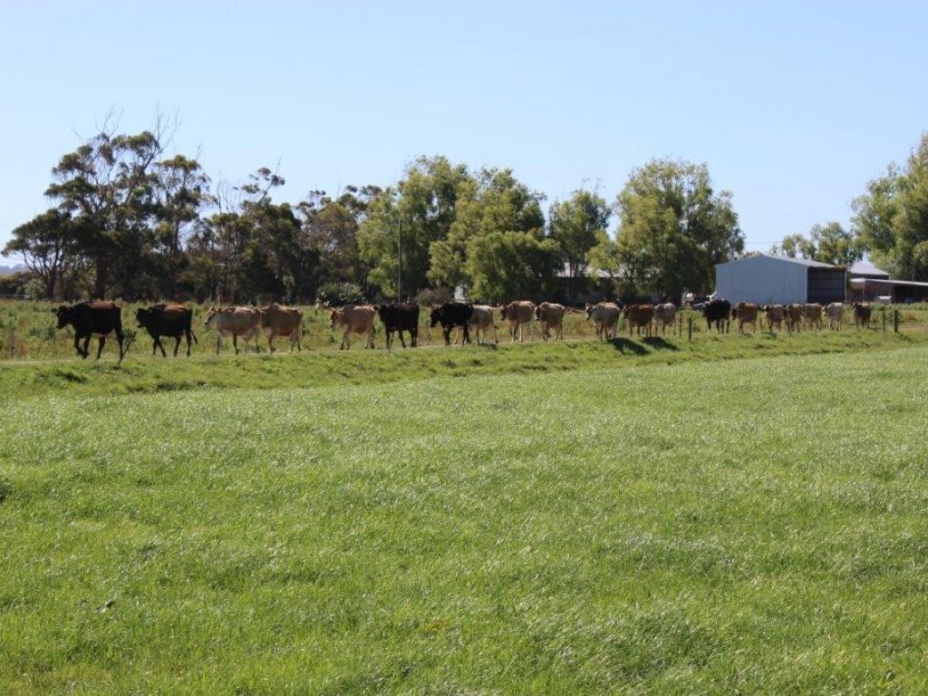 Farm for Sale - 100 Park Road, Togari, TAS - Farm Property