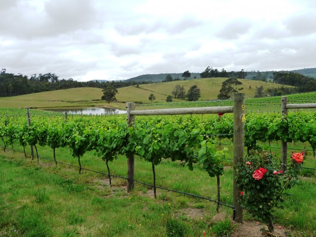 Farm for Sale - 1866 Pipers River Road, Lower Turners Marsh TAS - Farm Property