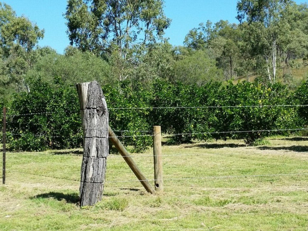 Farm for Sale - Address available by request, New Moonta QLD - Farm Property