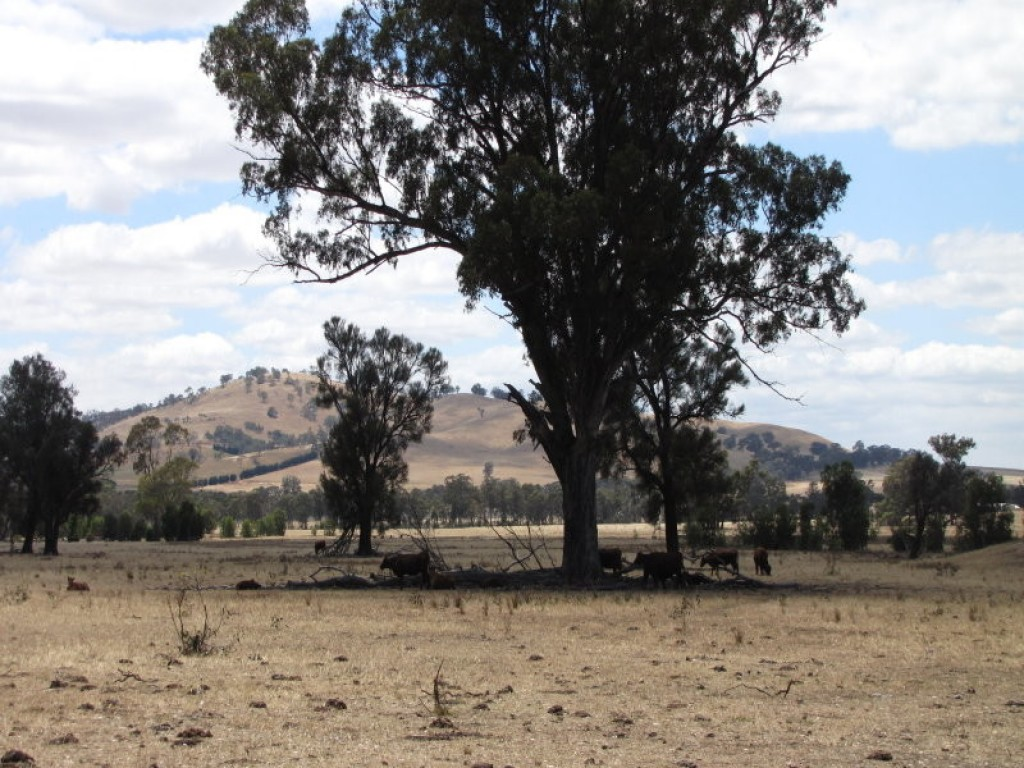 Farm for Sale -  Derrinal - Crosbie Road, Heathcote, VIC - Farm Property