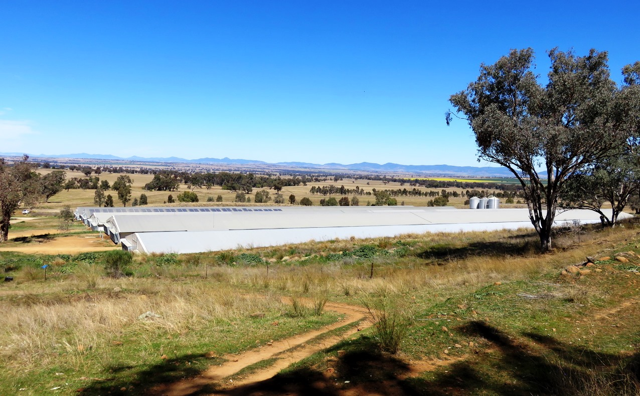Farm for Sale - 2797 Manilla Road, Attunga NSW - Farm Property