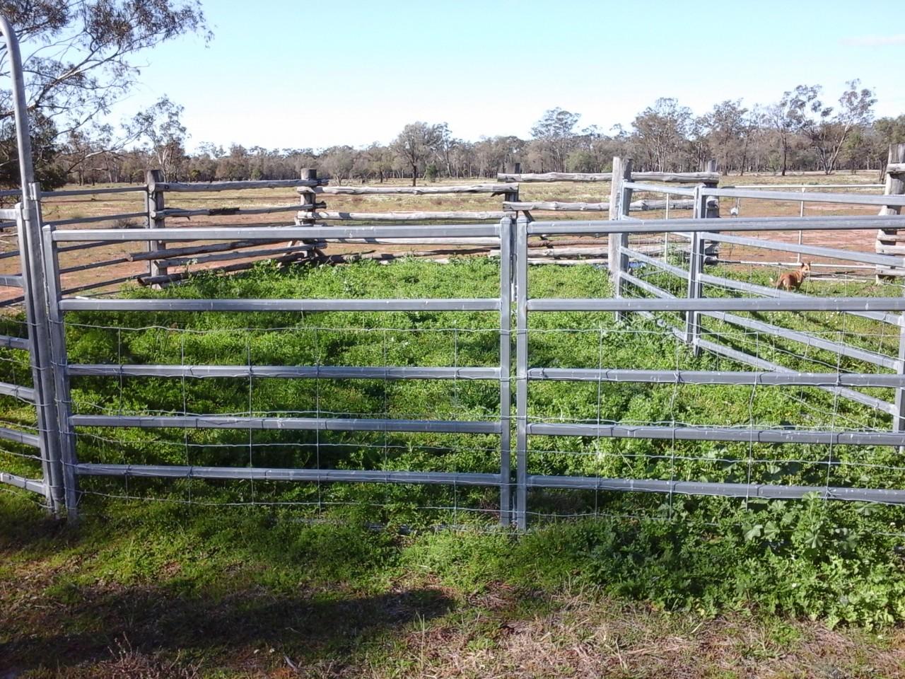 Farm for Sale -  492 Hulls Road, Wee Waa, NSW - Farm Property