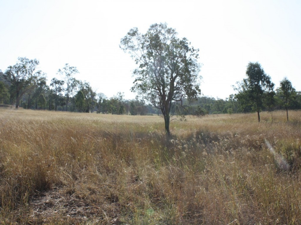 Farm for Sale - 3237 Gin Gin Mount Perry rd, Boolboonda QLD - Farm Property