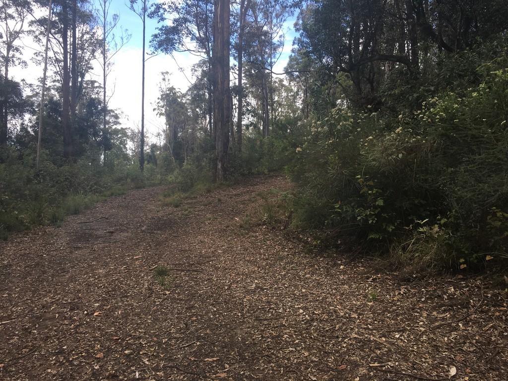82 Mount Street Dundurrabin Dorrigo - NSW