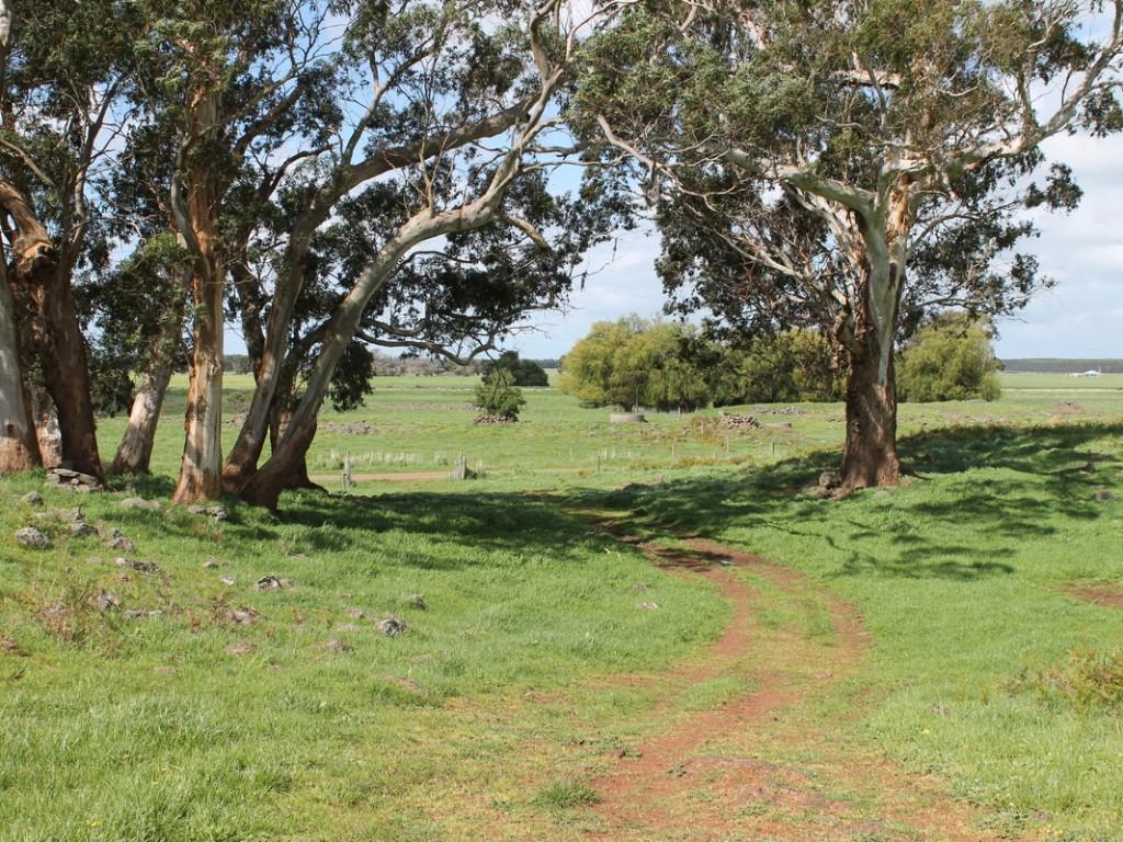 Farm for Sale -  Sextons Road, Swan Marsh VIC - Farm Property