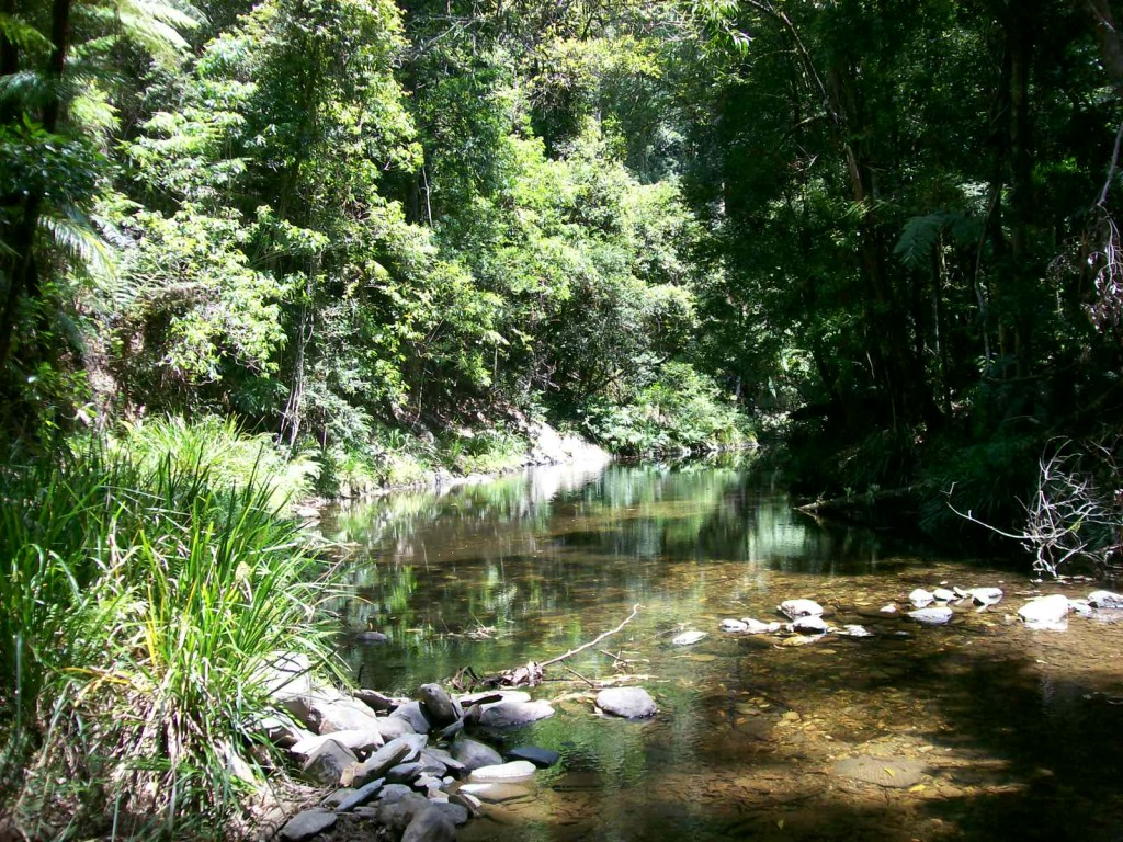 Farm for Sale - 3566 Kalang Road Kalang, Bellingen, NSW - Farm Property