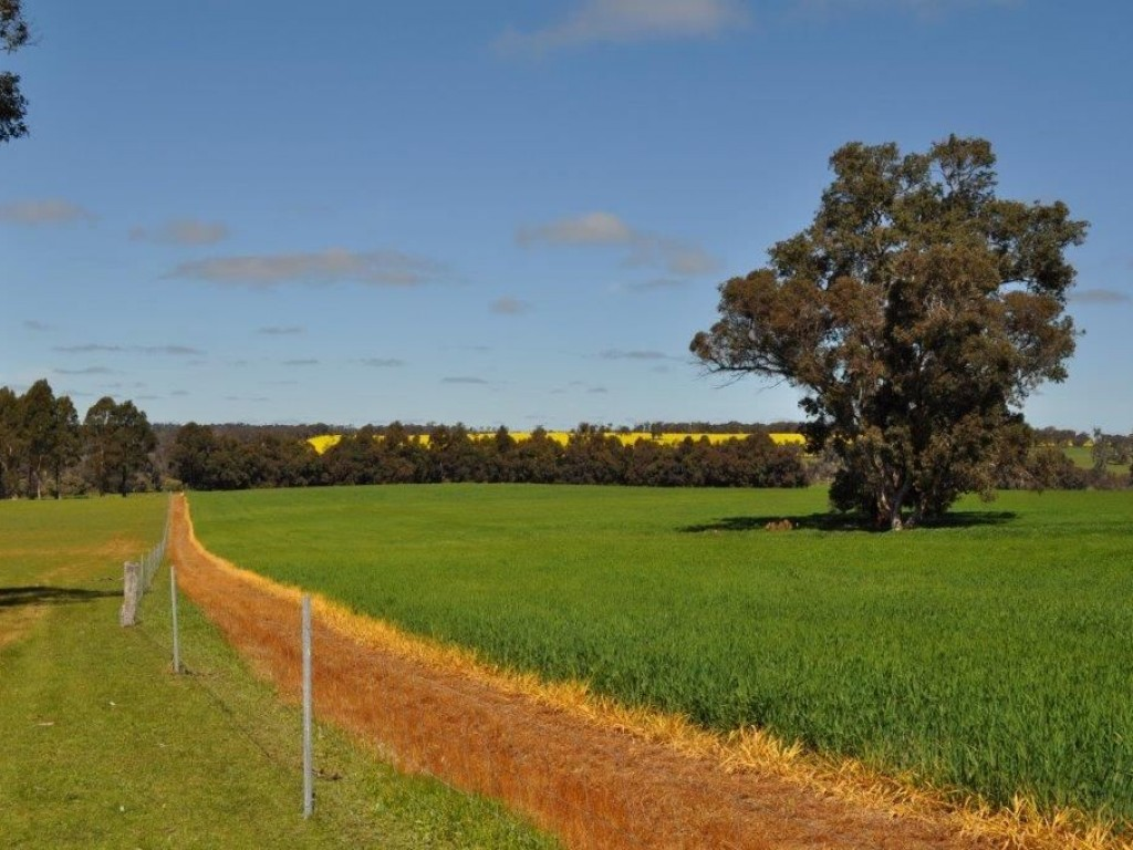 Farm for Sale - ' Trentham ', Kojonup, WA - Farm Property