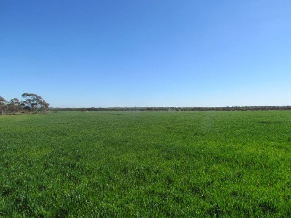 Farm for Sale - Address available by request, Perenjori, WA - Farm Property