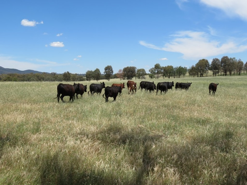 Farm for Sale - 949 Curra Creek Road, Wellington, NSW - Farm Property