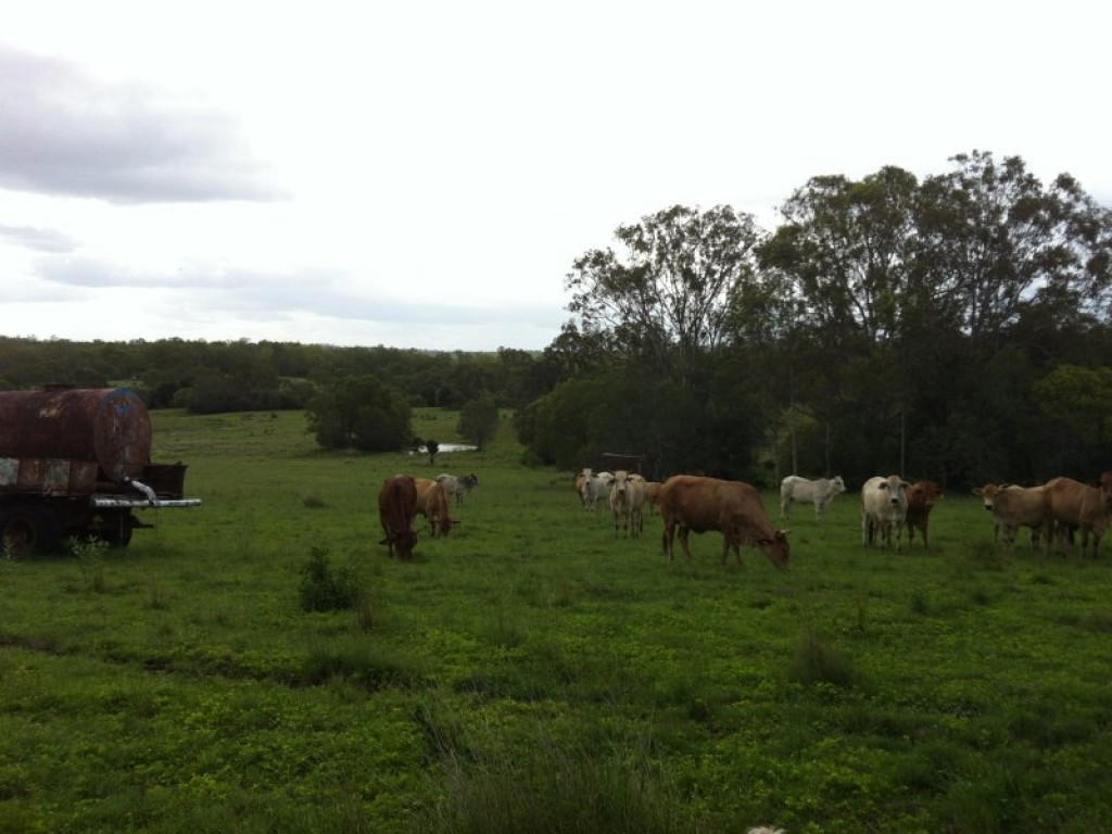 Farm for Sale - Address available by request, Childers, QLD - Farm Property