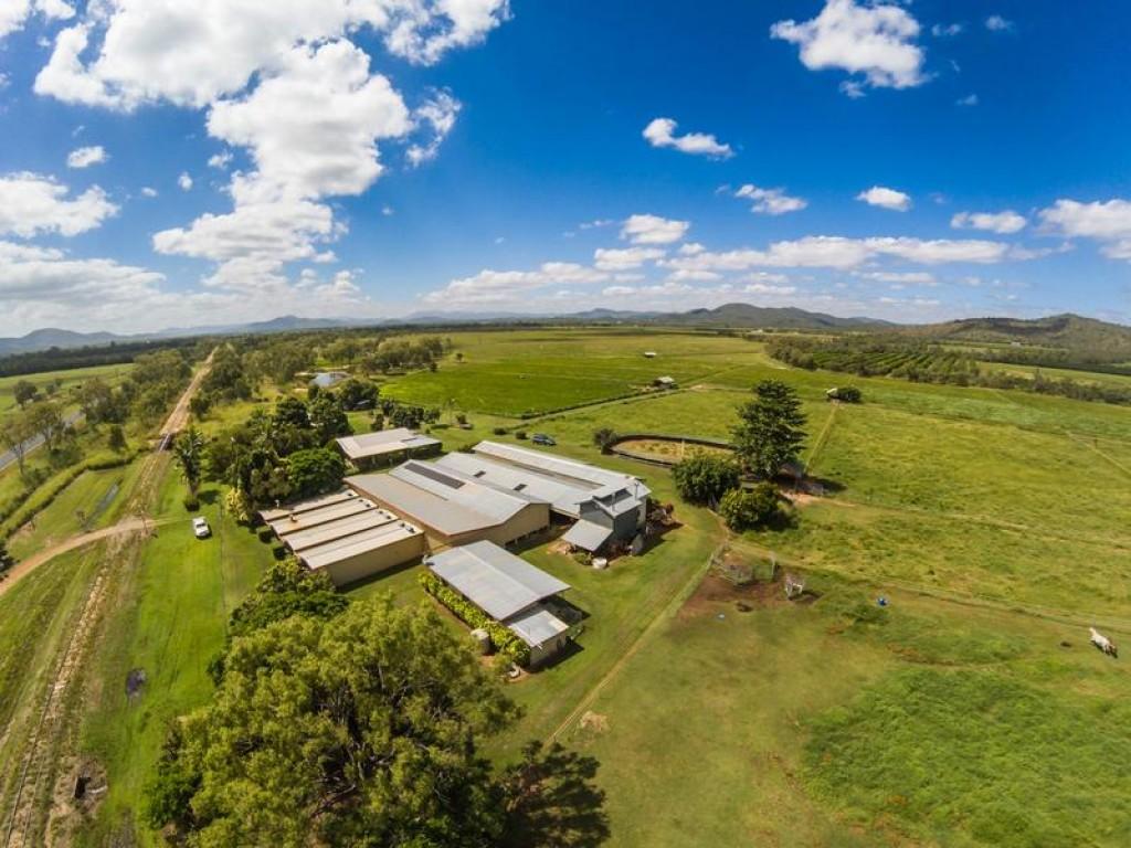 Rural Property & Farms for Sale - 4173 Mareeba-Dimbulah Road - Farm Property