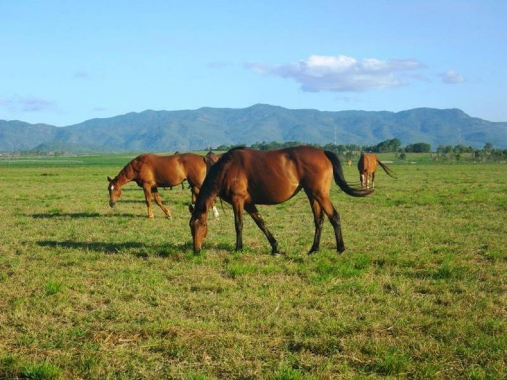 Farm for Sale - 123 Tinaroo Creek Road, Mareeba, QLD - Farm Property