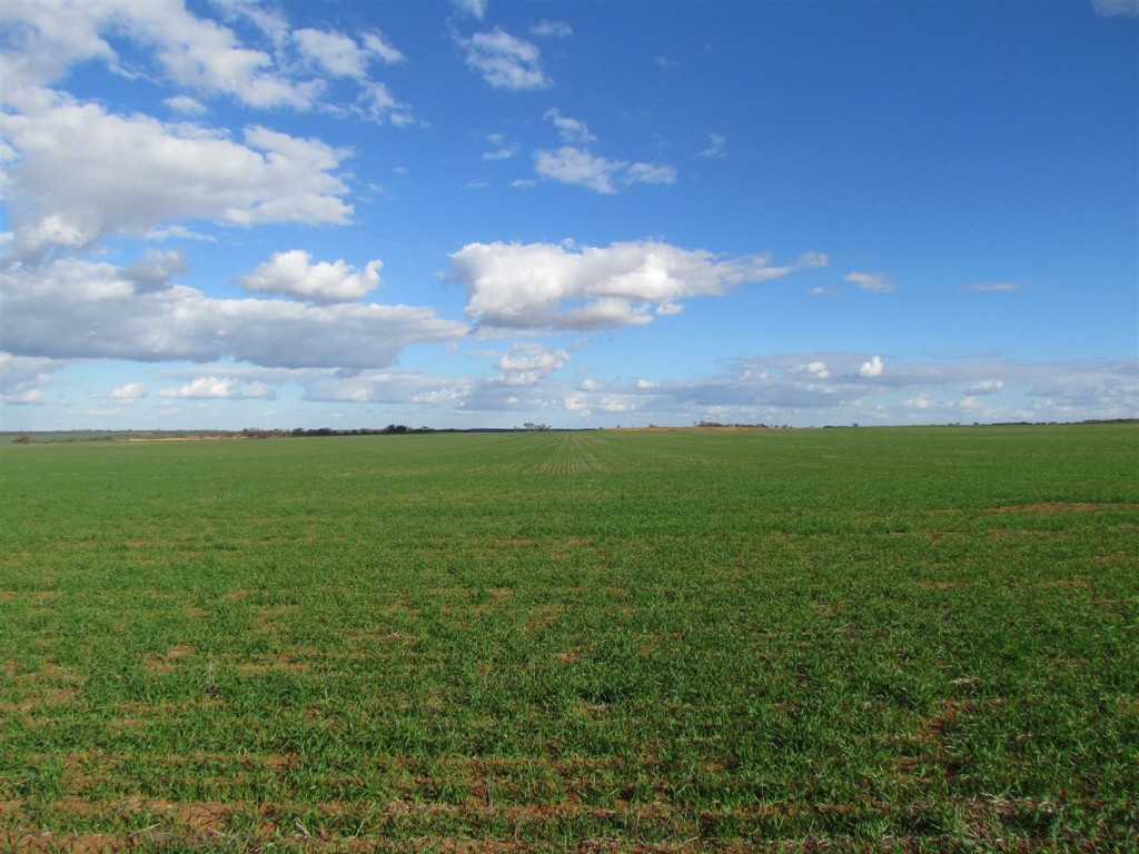 Farm for Sale - Lot 32 Bateman Road, Three Springs, WA - Farm Property