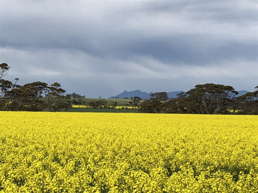 Farm for Sale - Address available by request, Gnowangerup WA - Farm Property