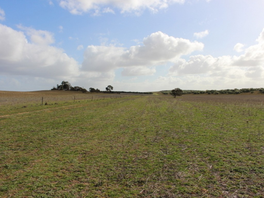 Farm for Sale - 1526 Parrakie South Road, Parrakie SA - Farm Property