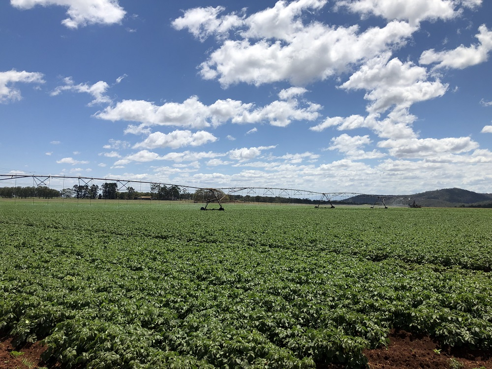 Farm for Sale - Address available by request, Tolga QLD - Farm Property