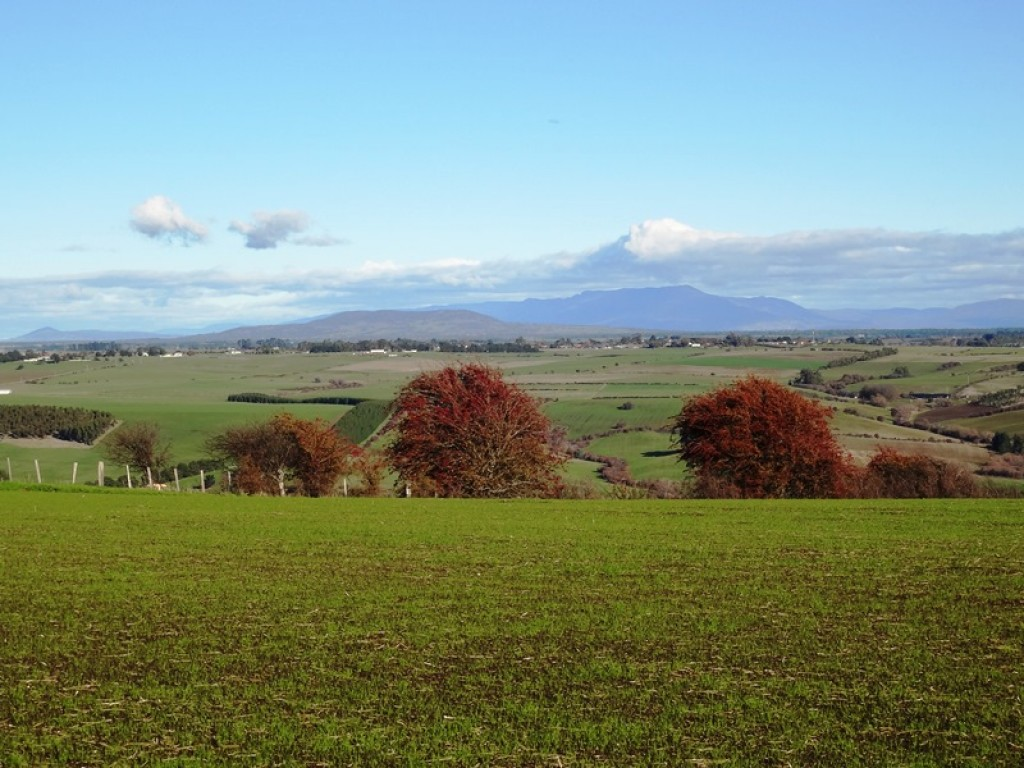 Farm for Sale - 195 White Hills Road, White Hills TAS - Farm Property