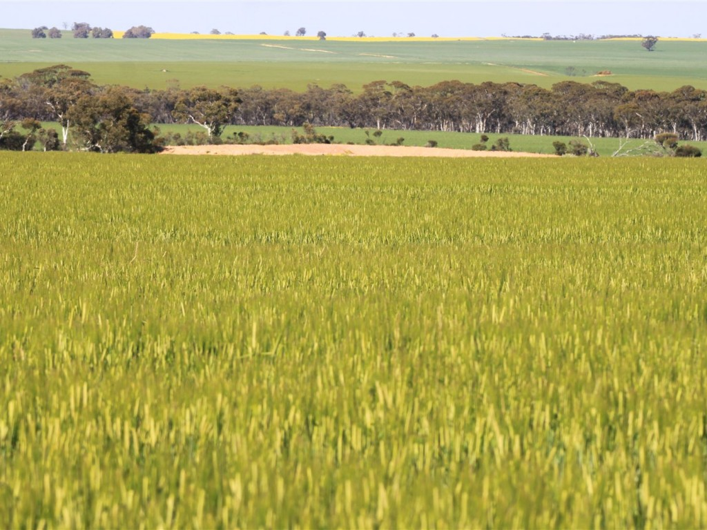 Farm for Sale - 168 Big Springs Road, Calingiri, WA - Farm Property