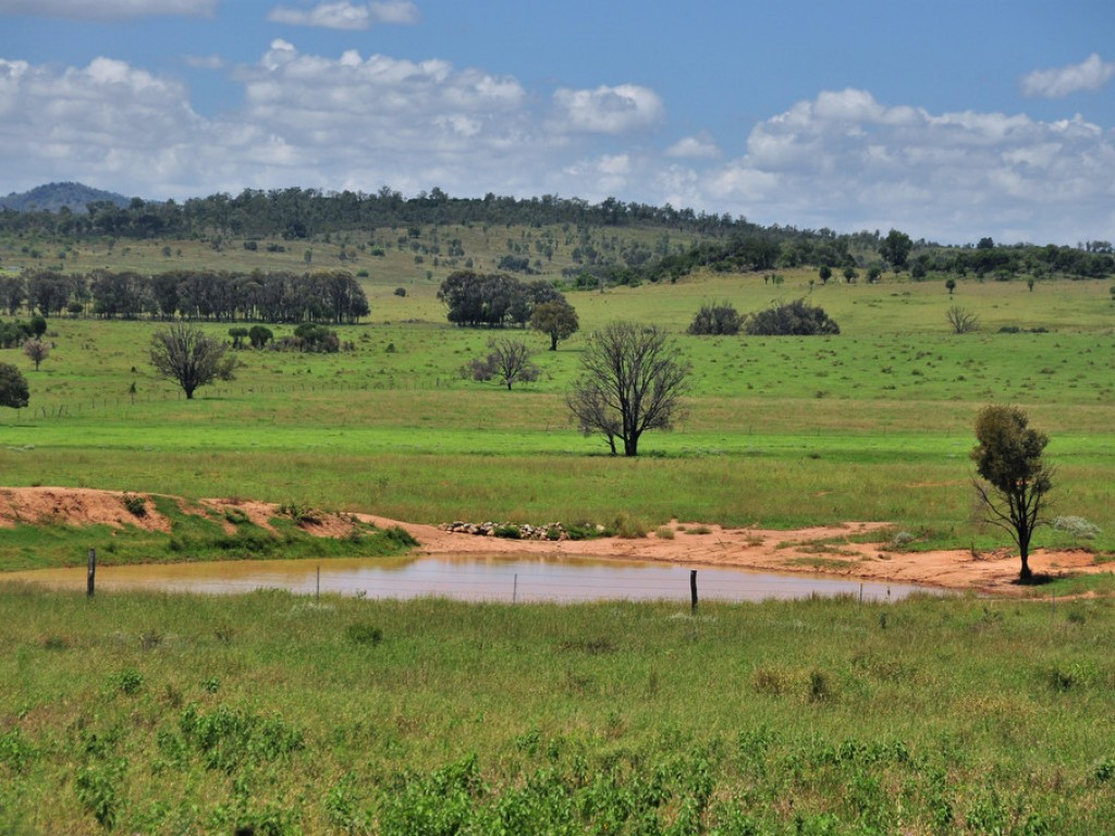 Farm for Sale - 'Uralla' 200 Morelands Road, Dululu, QLD - Farm Property