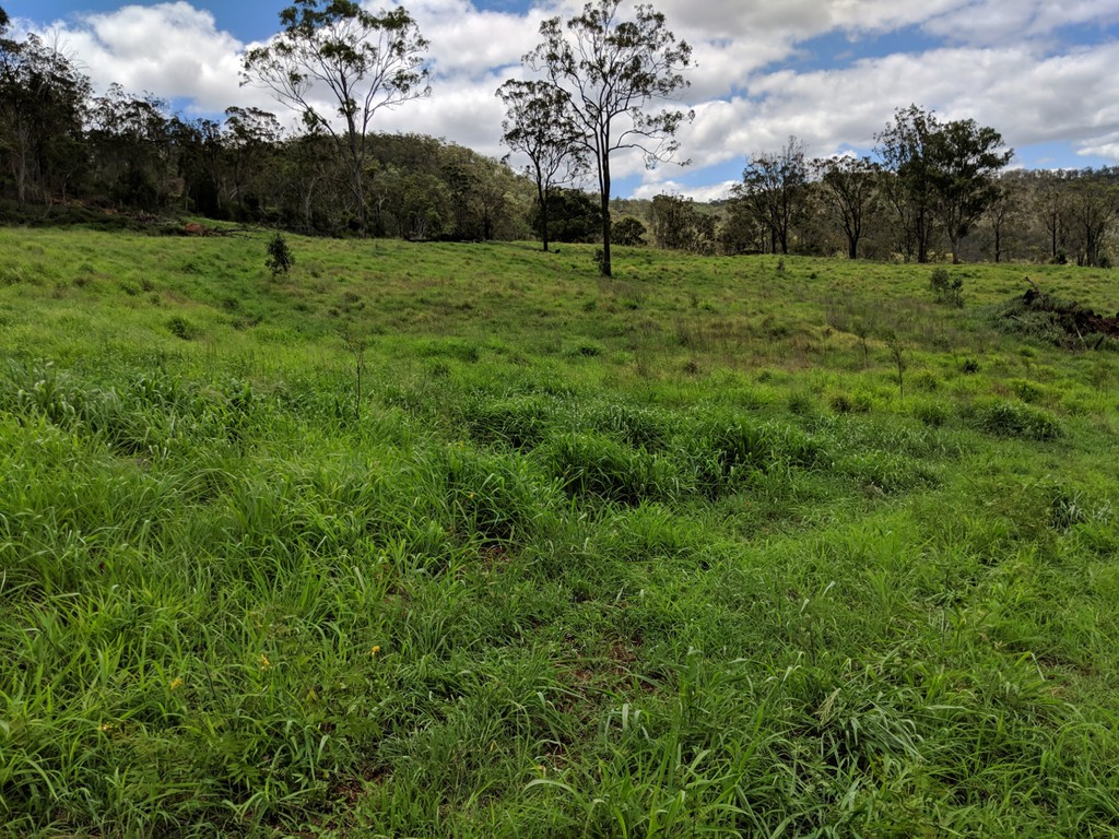 Farm for Sale - Address available by request, Budgee, QLD - Farm Property