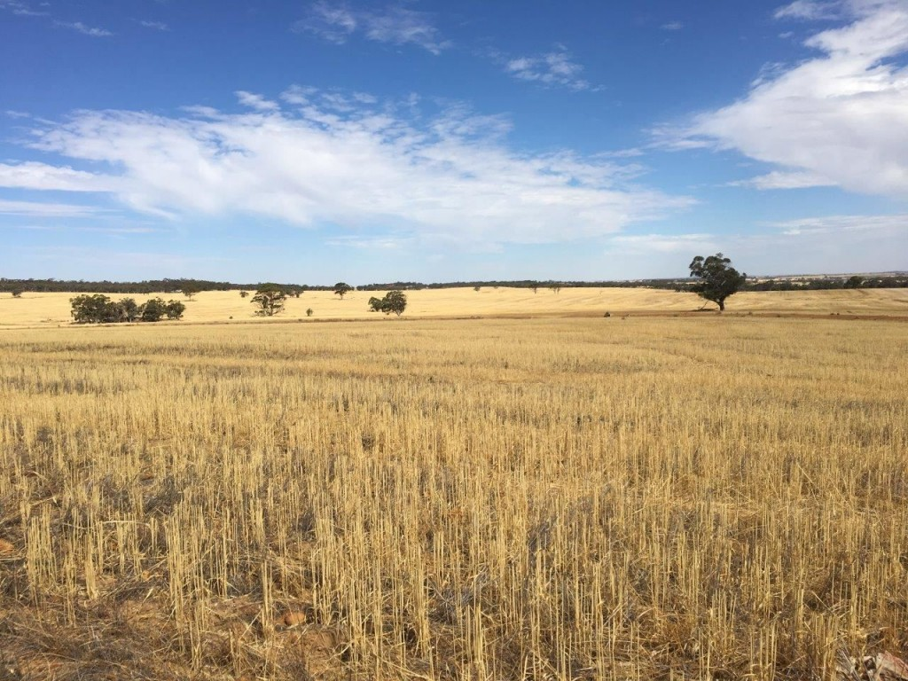 Address available by request, Quairading, WA 6383
