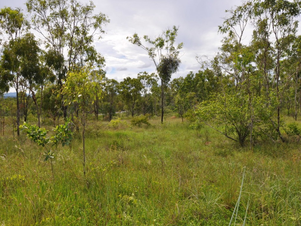 Rural Property & Farms for Sale - 558 Bilwon Road - Farm Property