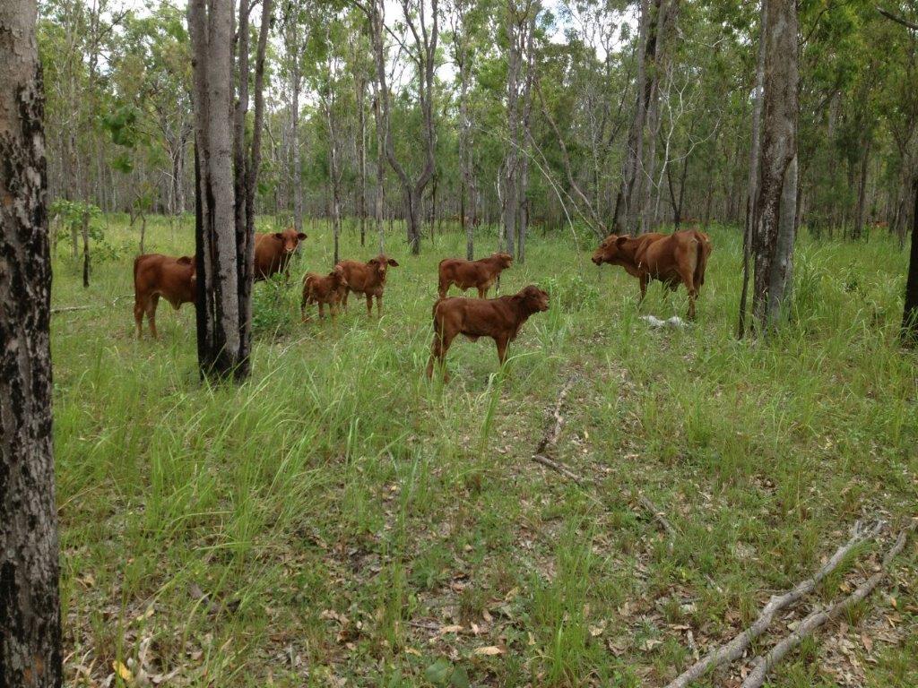 Farm for Sale - Lot 5 Wetherby Road, Mareeba, QLD - Farm Property